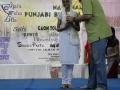 the-annual-national-punjabi-bhasha-mela-2014-540